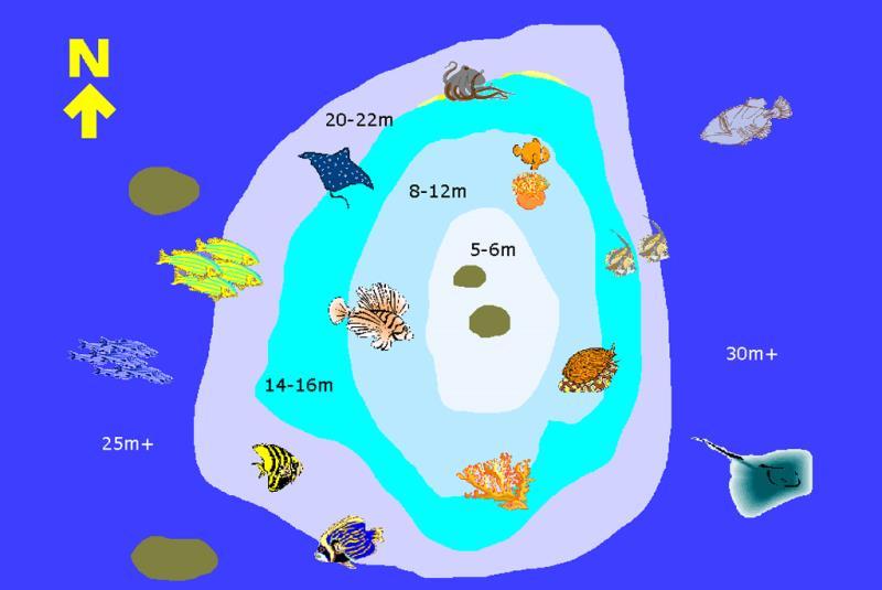 Site Map of Dhunikolhu Bodu Thila Dive Site, Maldives