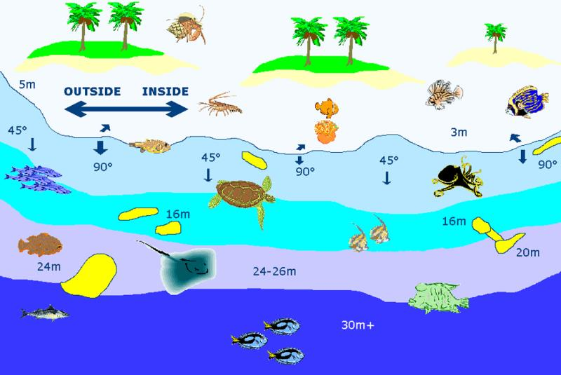Site Map of Ufulingiri Faru Dive Site, Maldives