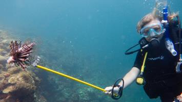 Join the hunt for invasive lionfish!