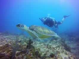 Turtle Encounter while Diving in Punta Cana