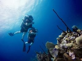 Catalina Island Diving, Dominican Republic