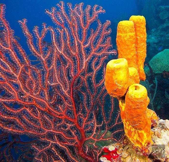 Living The Dream Divers Dive Shop Scuba Diving Cayman Islands