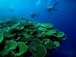 Hard coral garden