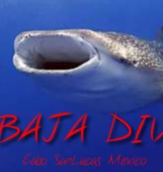 Baja Dive