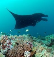 Matava   Fiji...Untouched