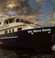 MV White Manta