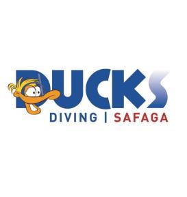 Ducks Diving Safaga