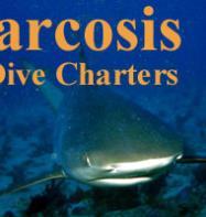 Narcosis Dive