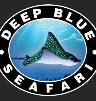 deep blue dive seafari inc