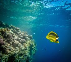 Marine life in Marsa Mubarak