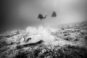 Neptun Reef