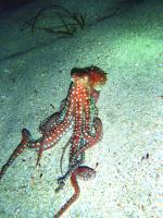 Green Bay, Night dive