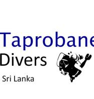 Taprobane Divers