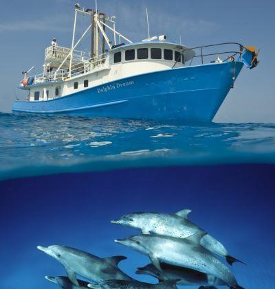 M/Y Dolphin Dream