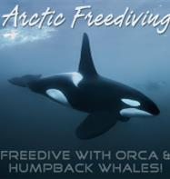 Arctic Freediving