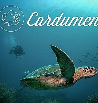 Cardumen