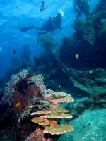 The Japanese Shipwreck in Amed