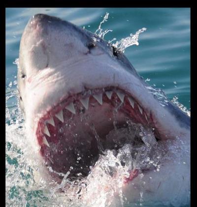 White Shark Safaris