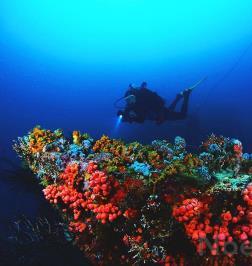 Undersea Tobago Scuba Dive Center