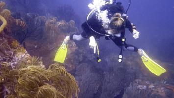 Discovering Amazing Marine Life