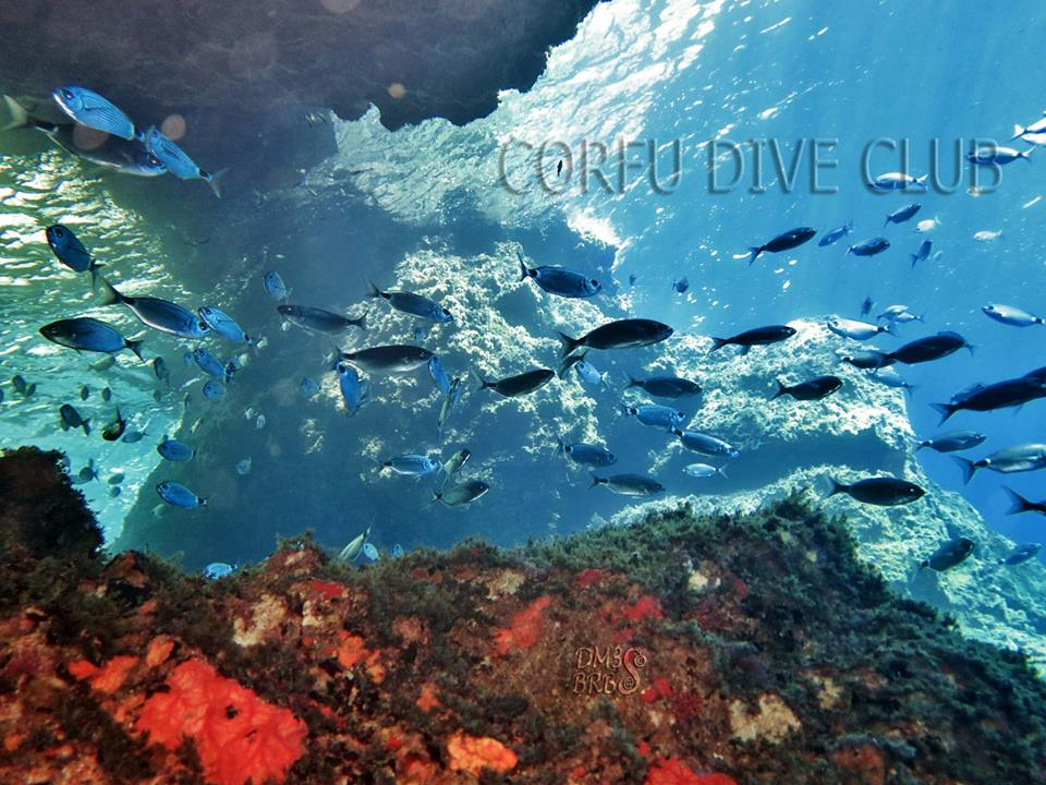 Corfu Dive Club Dive Shop Scuba Diving Greece