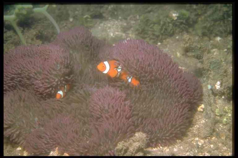 Gigantic Sea Anemone