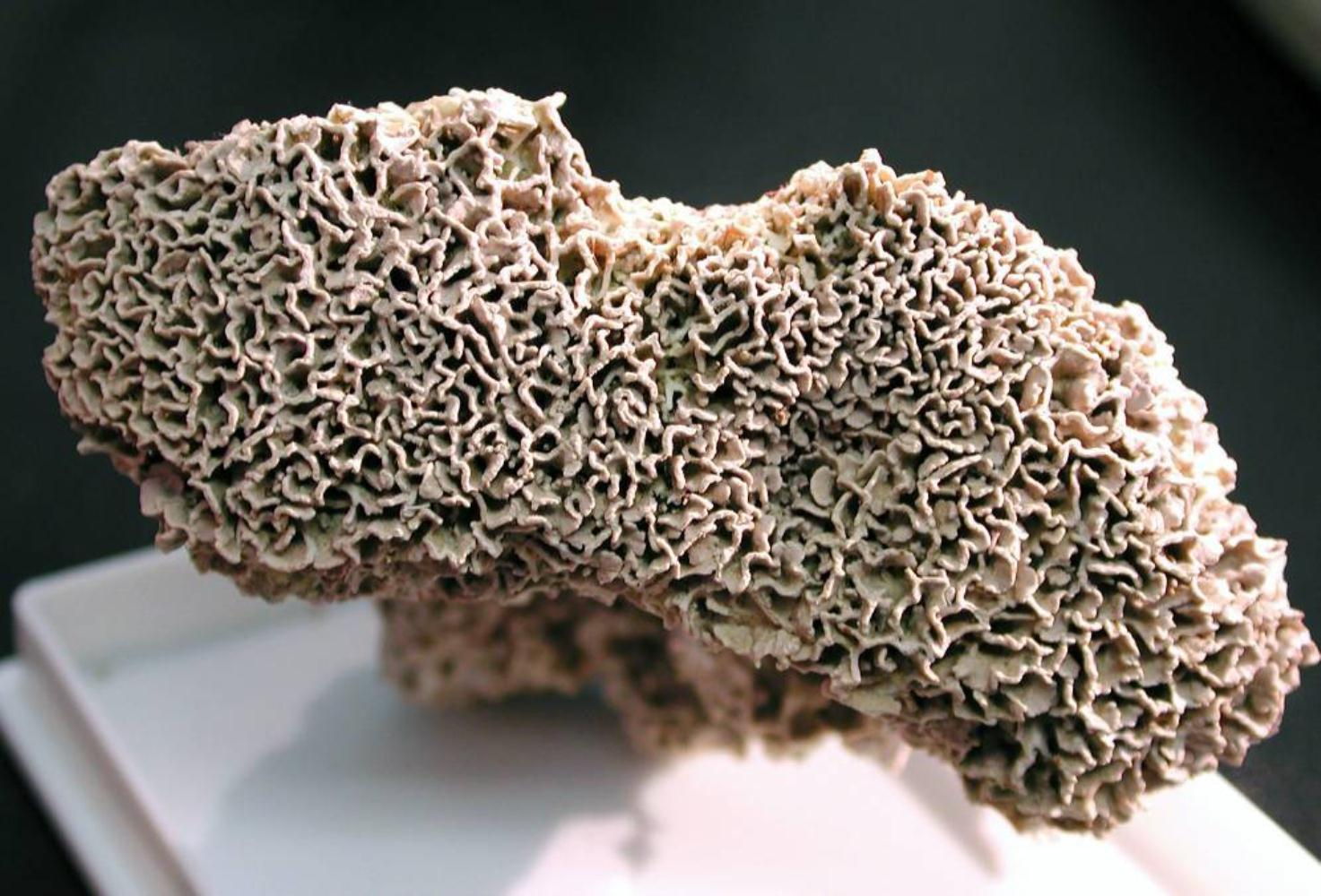 Trottoir coralline
