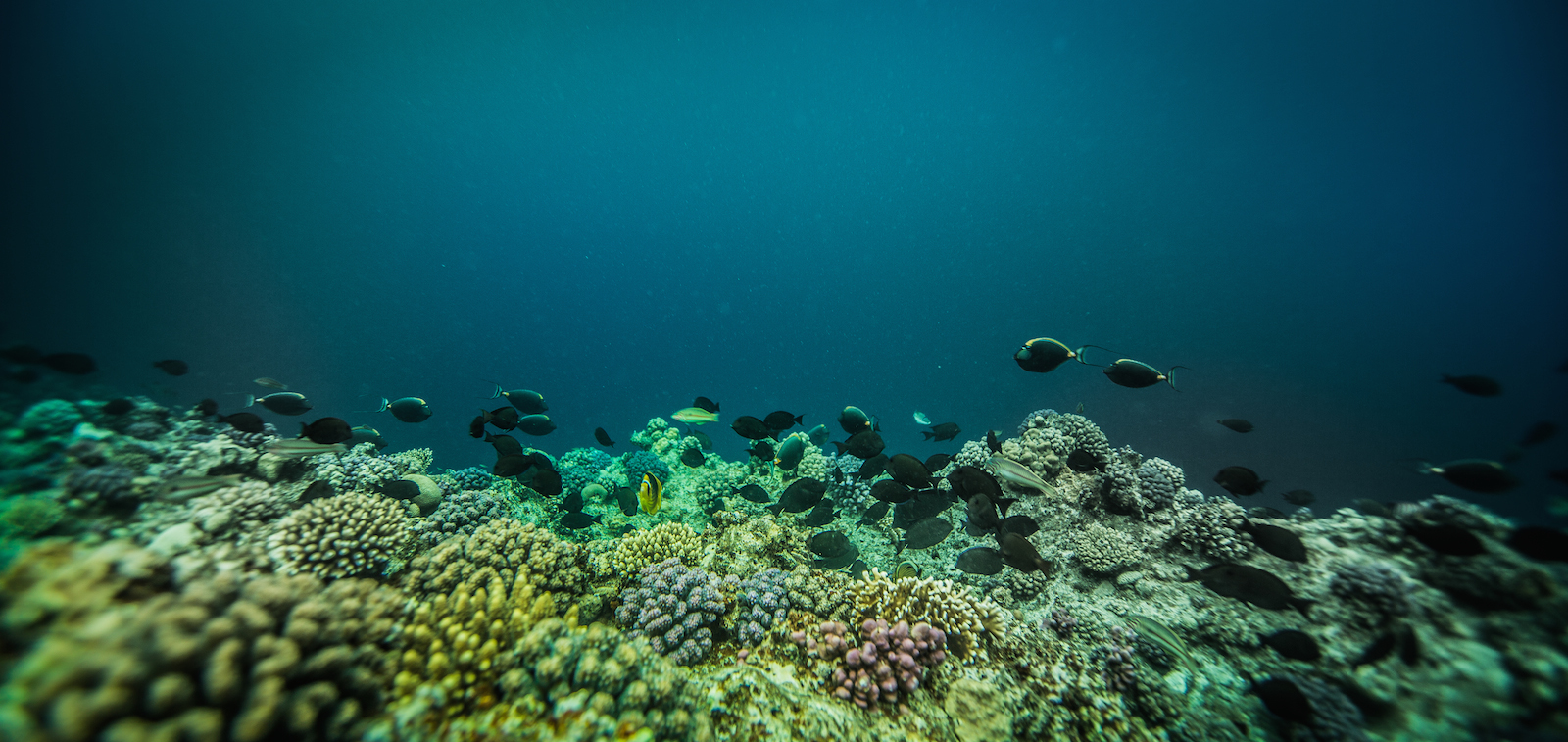 Book your Fish Identitification Course with Ducks Diving Superior & explore the beauty beneath the waves..
