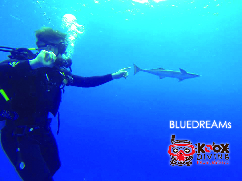 if blue water is what you want.. life and color!.. you will find.. in the Caribbean.. enjoy every dive in this amazing spots.. tulum!