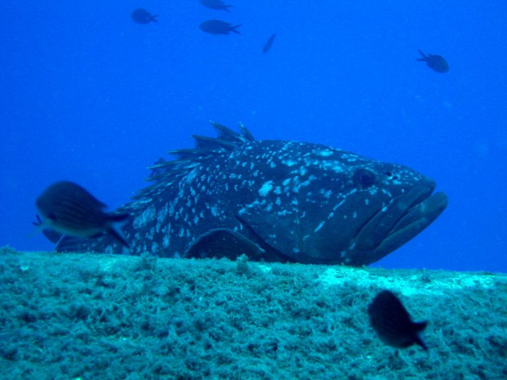 Best scuba diving in Cyprus with Cyprus Diving Adventures