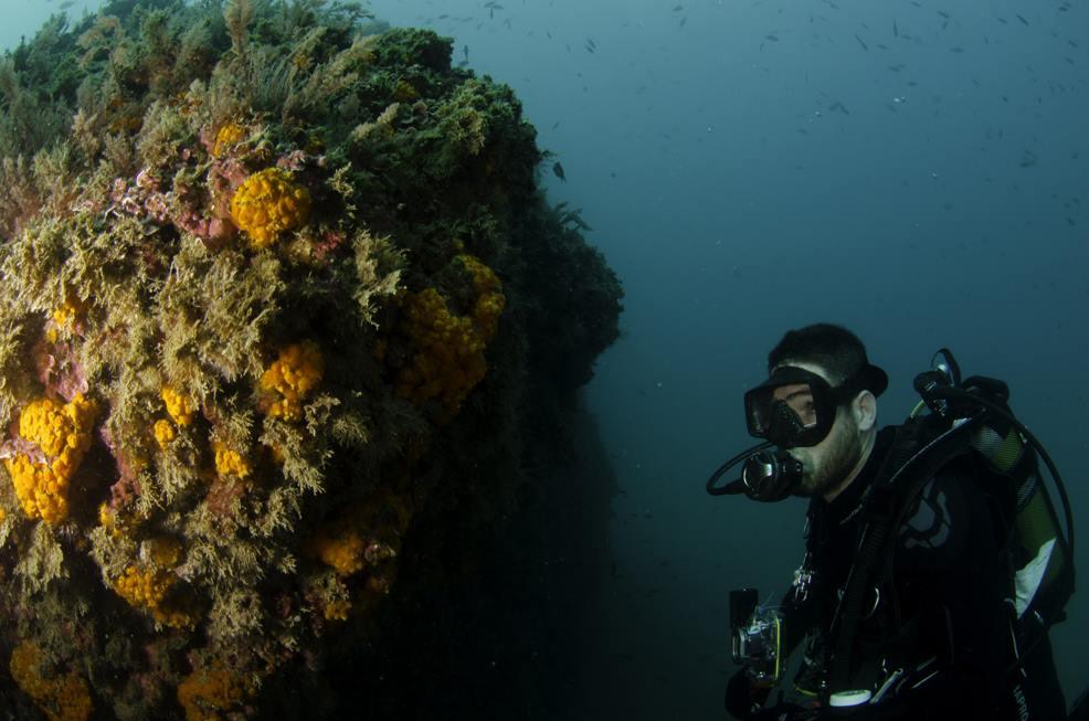 watching orange coral