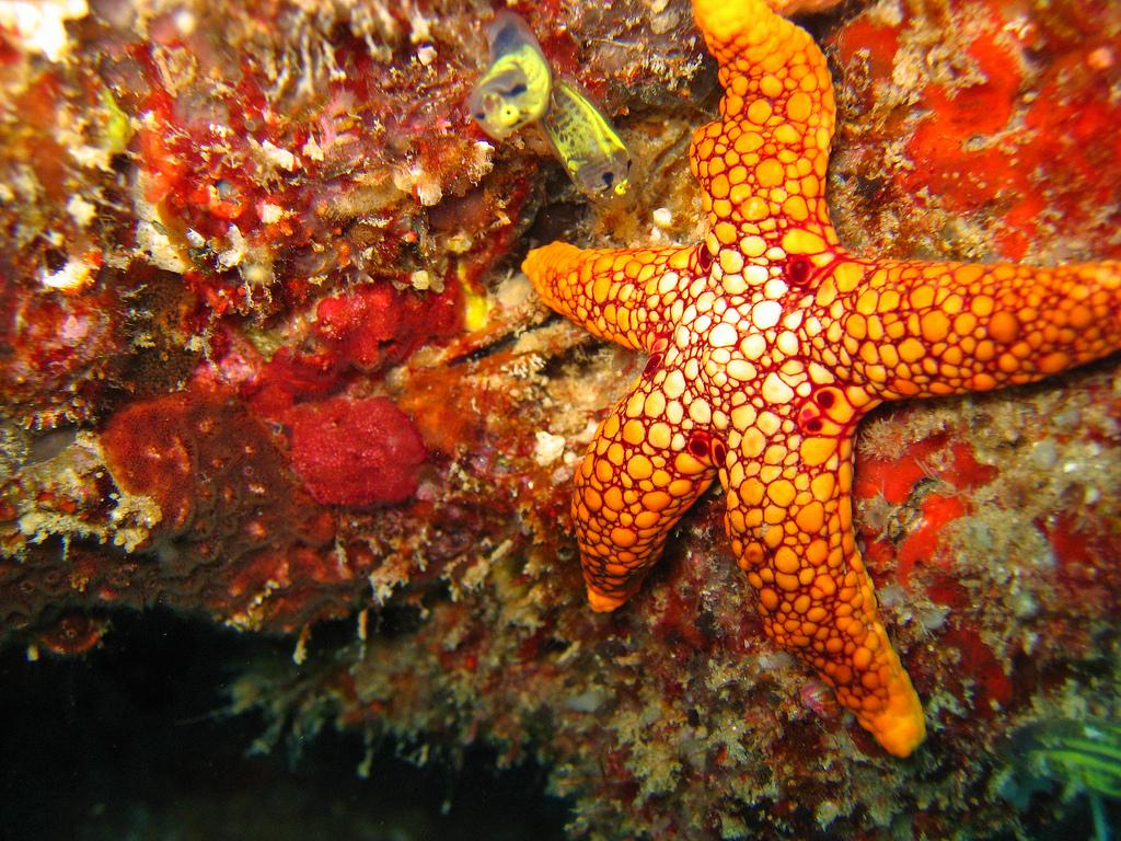 Star fish Photo by: Andy Walker Link: https://flic.kr/p/8MYoiU
