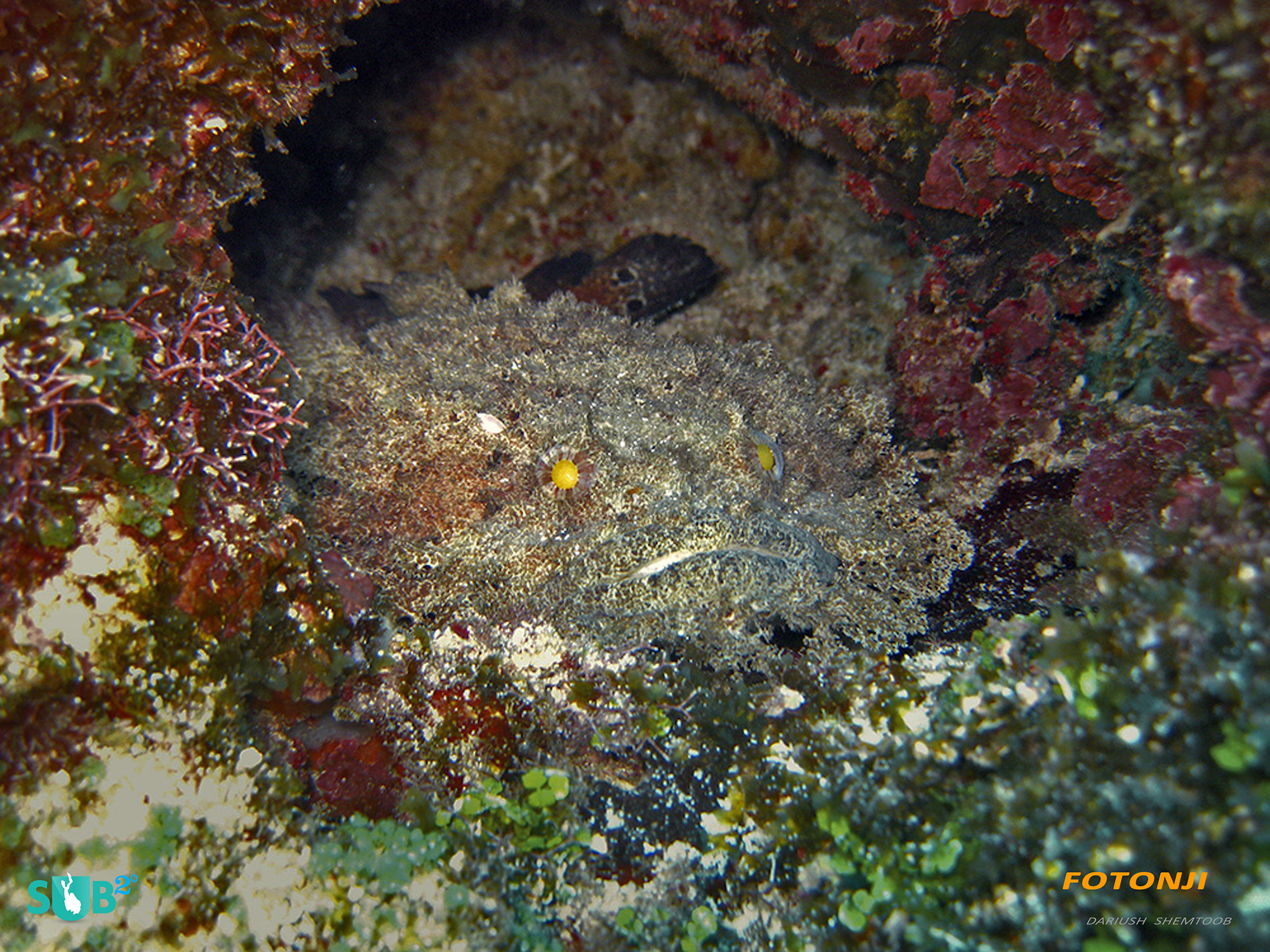 The Devil Fish is one of the more unique finds in the Corn Islands