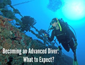 Advanced diving in the Florida keys