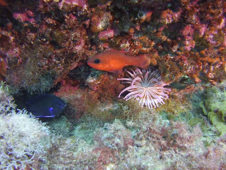 Marine life Tenerife Las Galletas, El Fraile