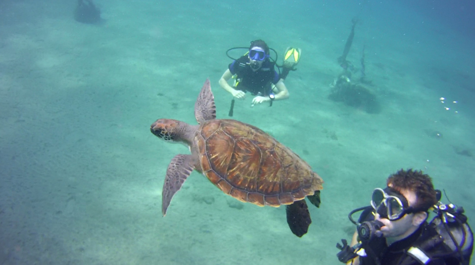 Turtle diving Tenerife