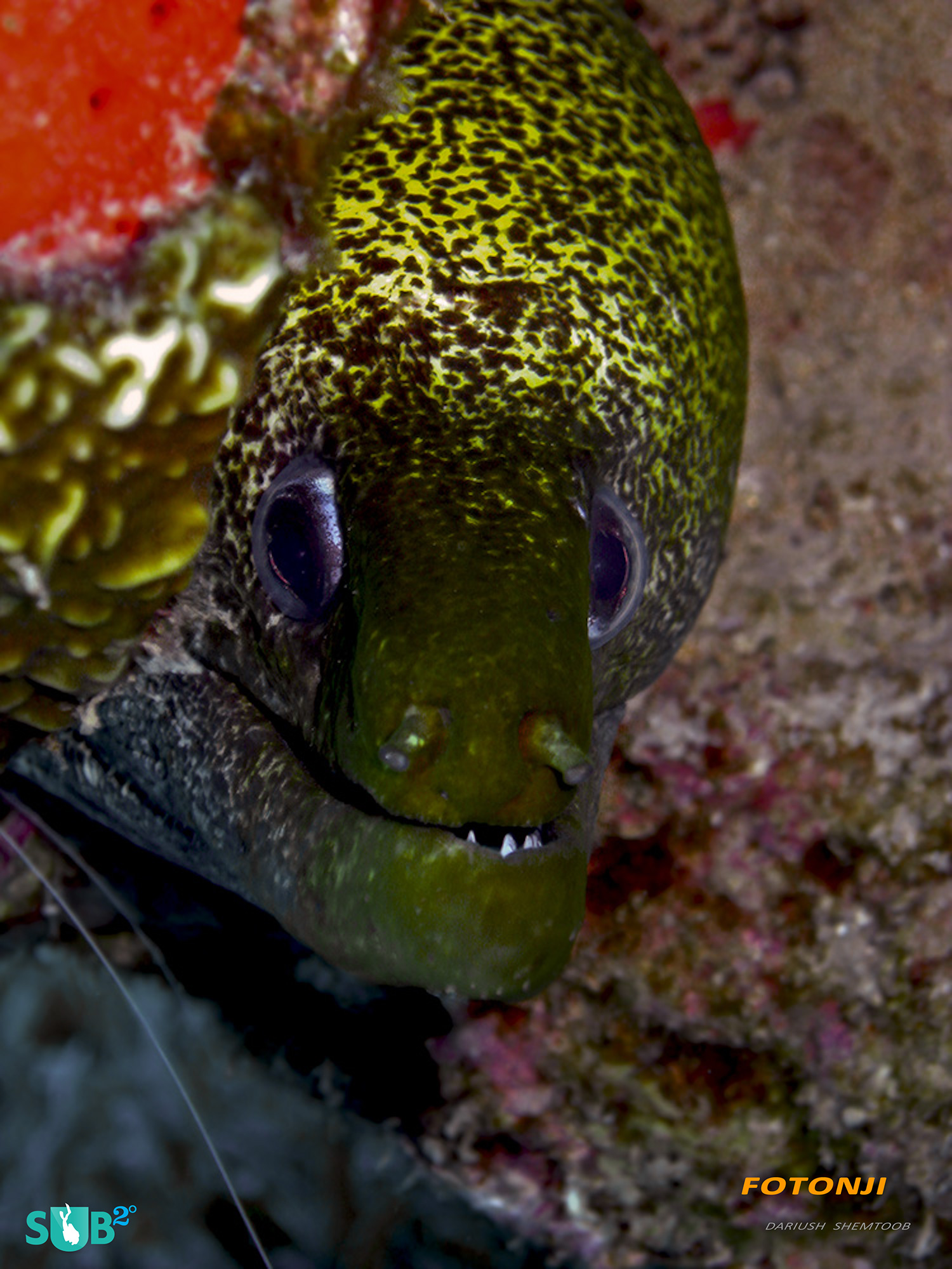 This curious moray eel seemed to constantly demand attention popping its head out and following the camera [1/60, f2.8, ISO250]