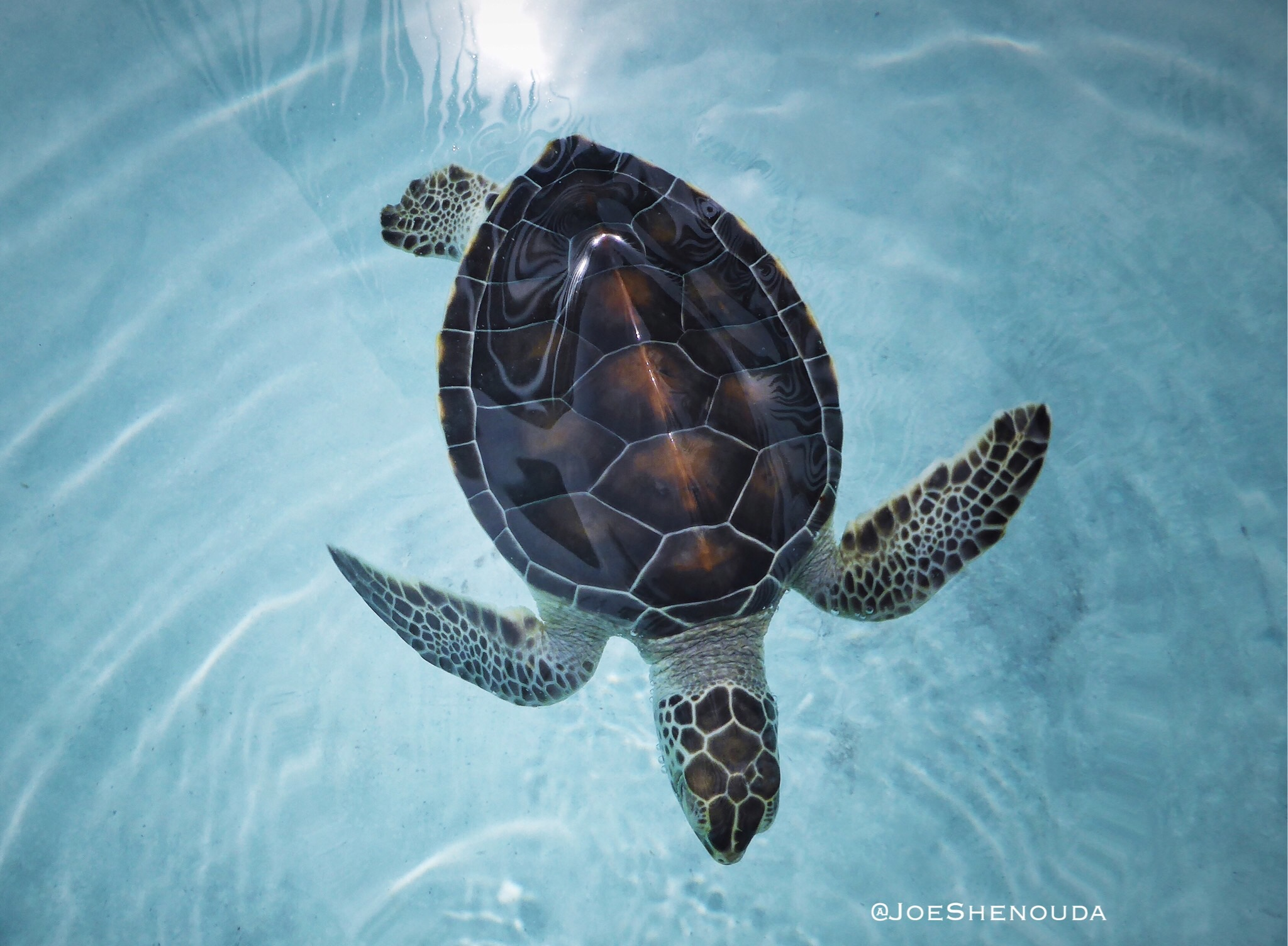 """""""With every drop 💧of water you drink, every breath 🌬you take, you're connected to the sea 🌊 . No matter where on earth 🌏 you live."""" - SYLVIA EARLE. 🐢 ."""