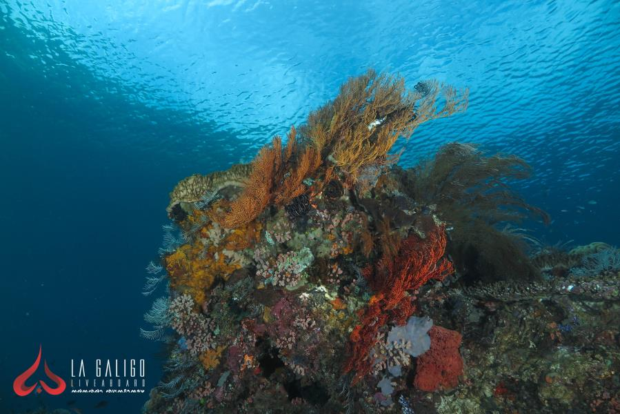Batu Balong coral tower