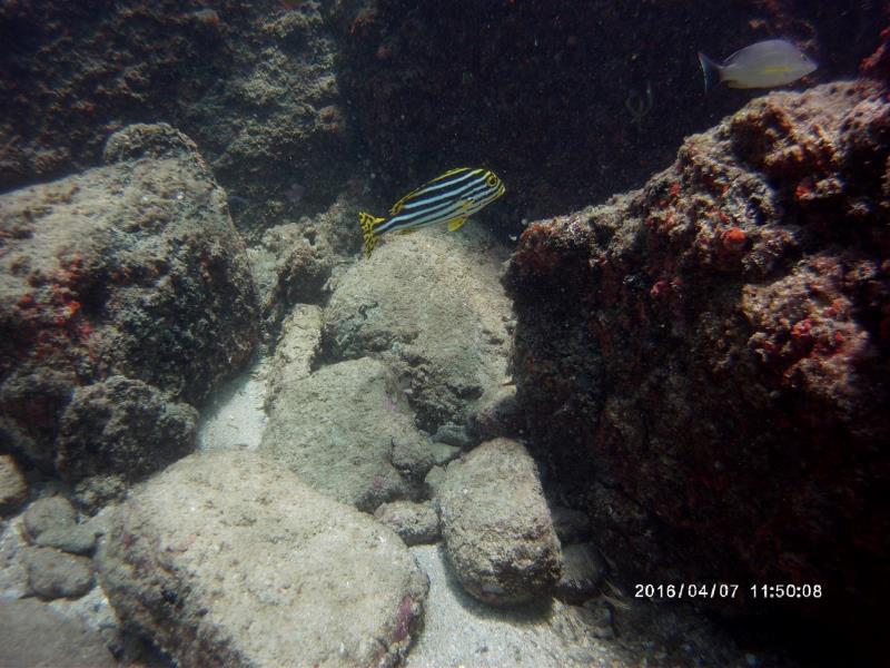 Beautiful fish and rock