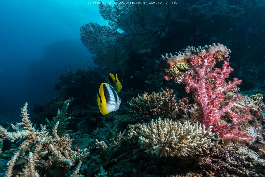 Beautiful soft corals