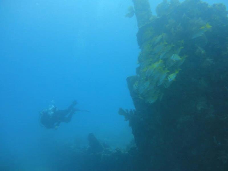 catalina wall dive