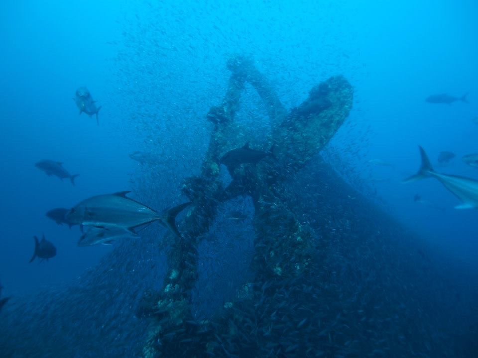 "This big bronze four bladed prop is on the stern of the ""mystery wreck"" located very near the Diamond Shoals Light Tower, Cape Hatteras, NC, USA.  We believe this wreck to be the Merak, sunk in WW1 by German U-boat."
