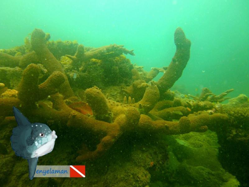 Big Sub-massive Coral