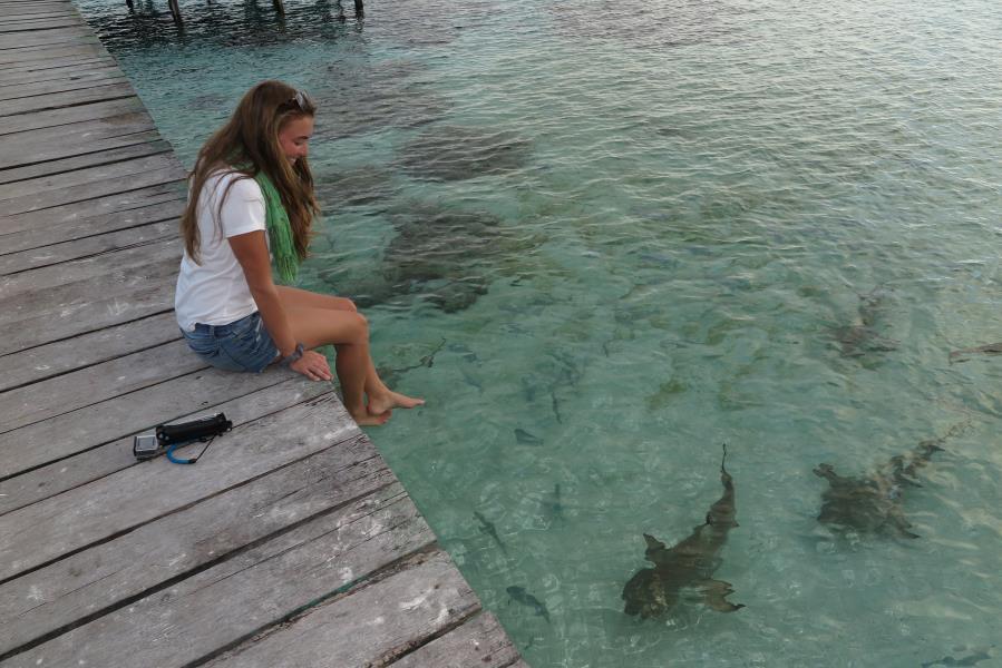 Black Tip Reef Sharks at Wayag Ranger Station Jetty