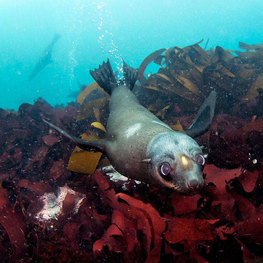 Sea puppy :)