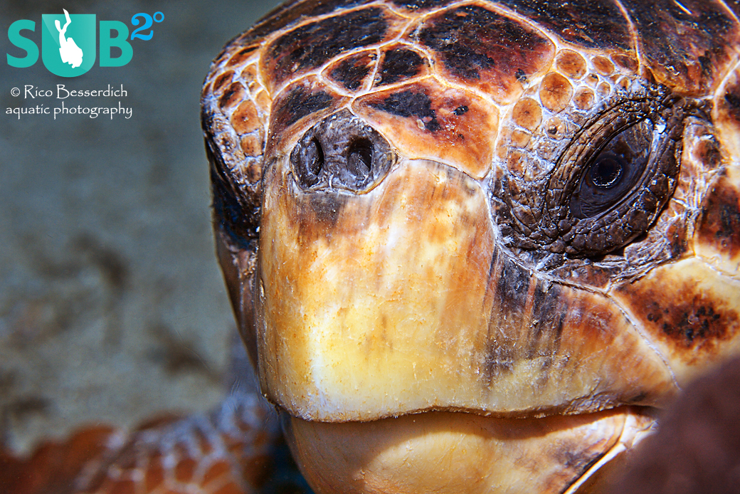 It is in the nature of underwater photography that you often feel like you're equipped with the wrong lens. Meeting a turtle with a macro lens mounted to the camera is not always the ideal situation.