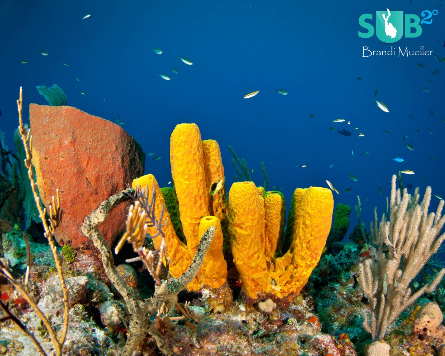 The Cayman Islands offer a Garden of Underwater Eden just offshore.