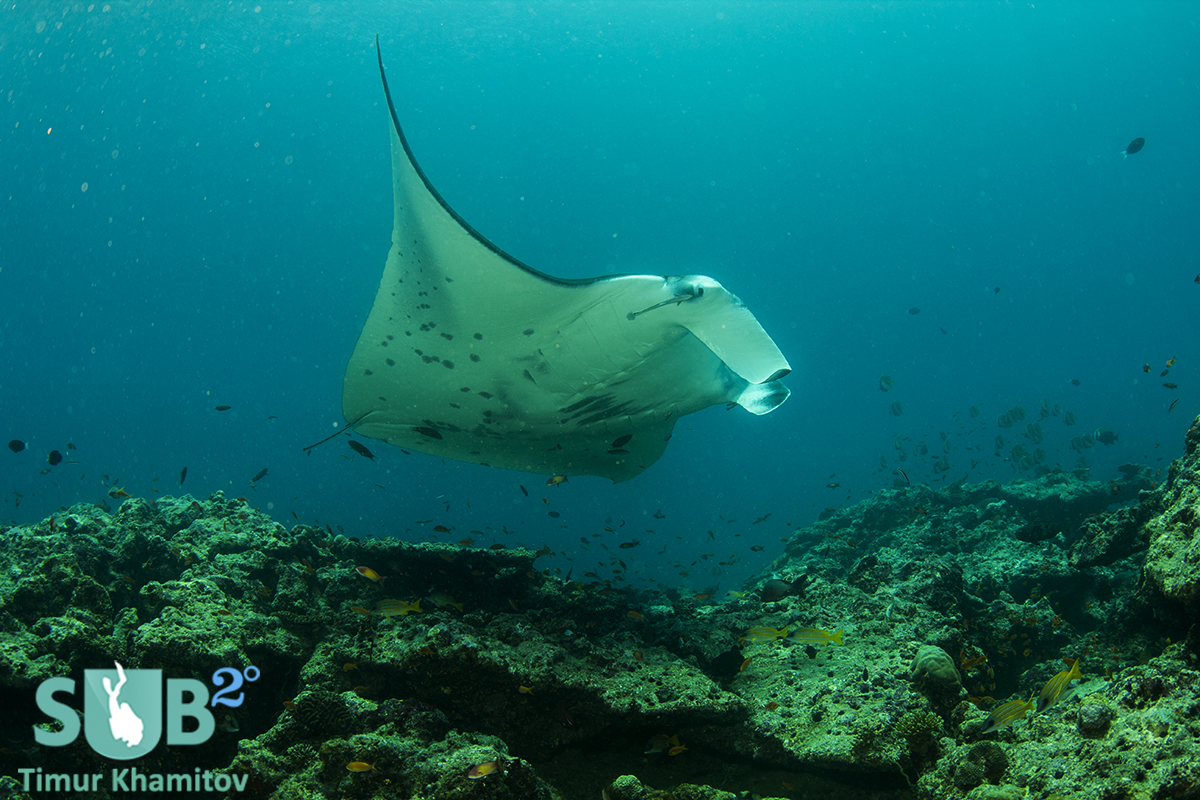 Very friendly manta that hung out with us until our tanks were empty.