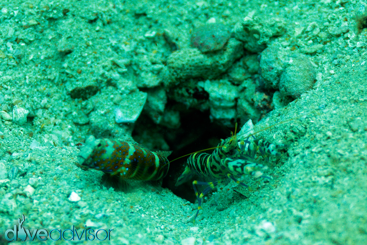 Not sure what these are - the one on the right was some kind of shrimp. I find it entertaining to try and get a shot of little creatures that run in and out of their homes and get a nice shot, although these 2 were tough and I couldn't get as near as I'd have liked.